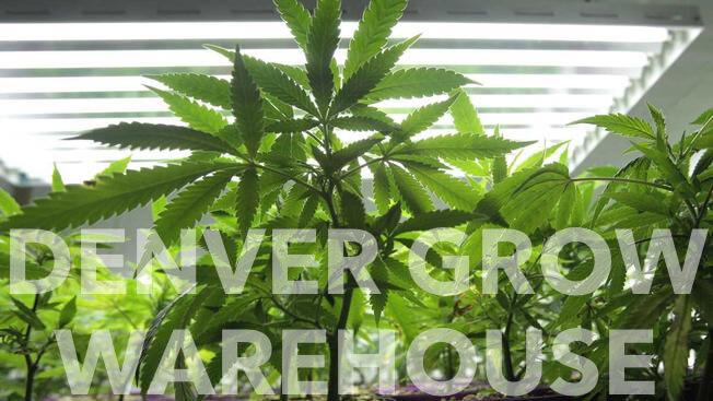 denver-grow-2